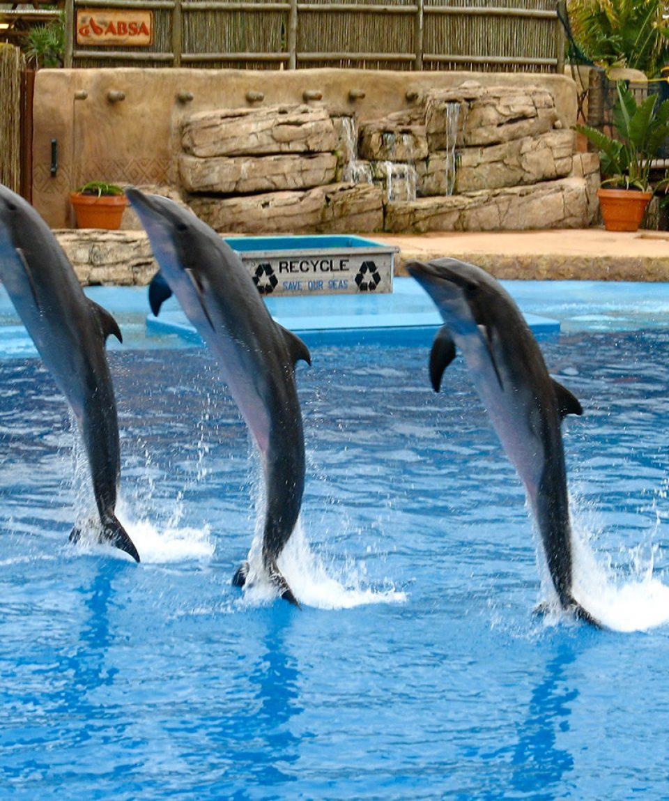 Dolfin Show
